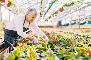 Senior woman working in the flower nursery