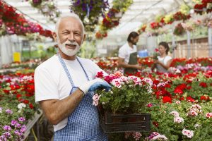 Senior working part time as a gardener
